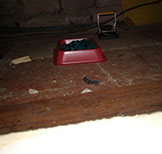 a picture of a mouse trapping 2