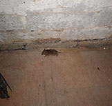 a picture of a mouse trapping 5