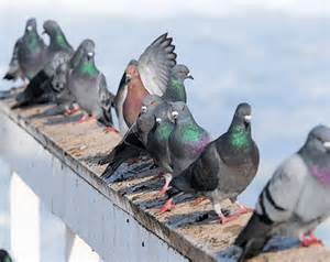 a picture of pigeon proofing 7