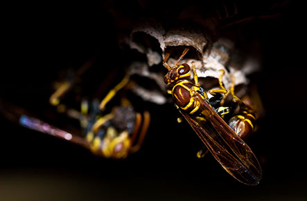 a picture of a wasp 2