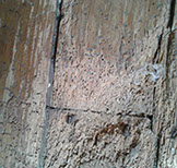 a picture of a woodworm job 7